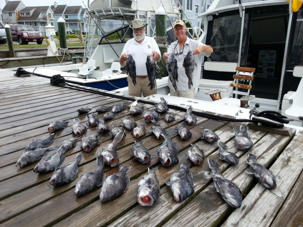 Marauder outer banks fishing charter saltwater fishing for What saltwater fish are in season now